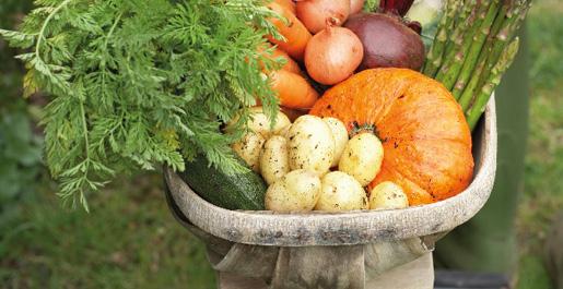 Drive des champs : des produits fermiers de nos terroirs à prix producteurs et livrés près de chez vous